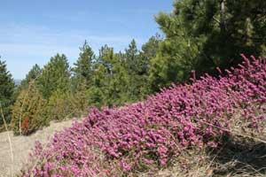 Priroda Zlatibora
